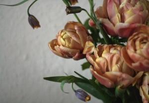 Belle Epoque tulips, Fritillaria pontica and Fritillaria michailovskyi