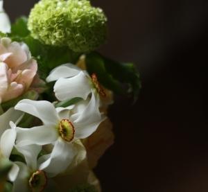 Narcissus and viburnum opulus